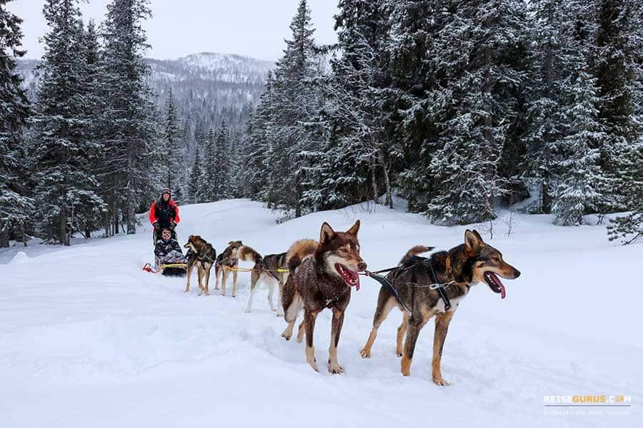 Erfahrungen-Hundeschlittenfahrt-Norwegen