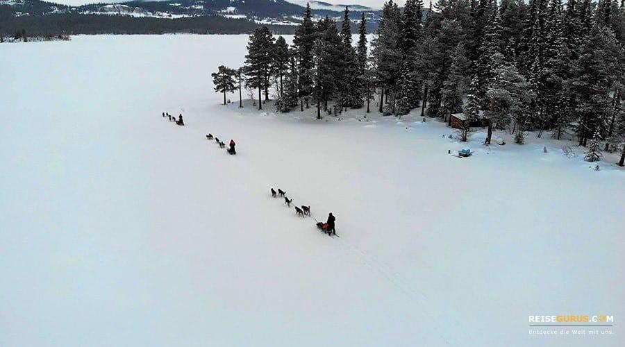 Drohnen-Foto-Hundeschlittenfahrten-Norwegen-Huskytour