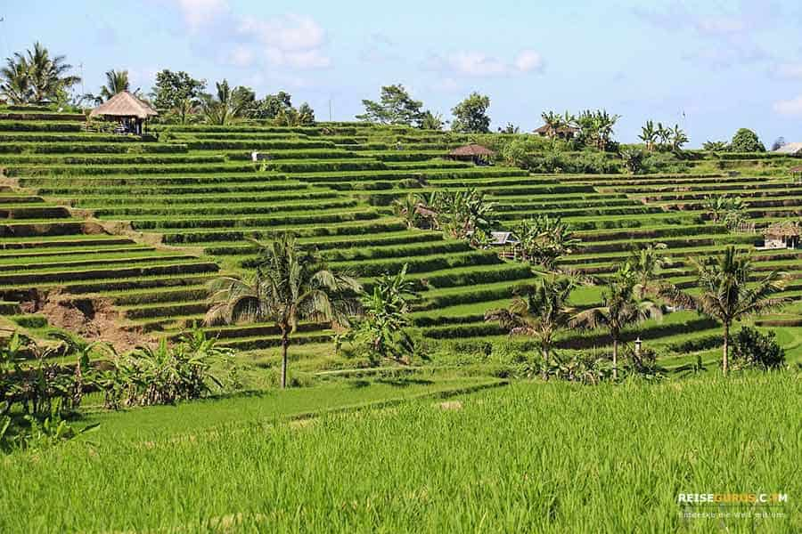 Belimbing Reisfeldern auf Bali