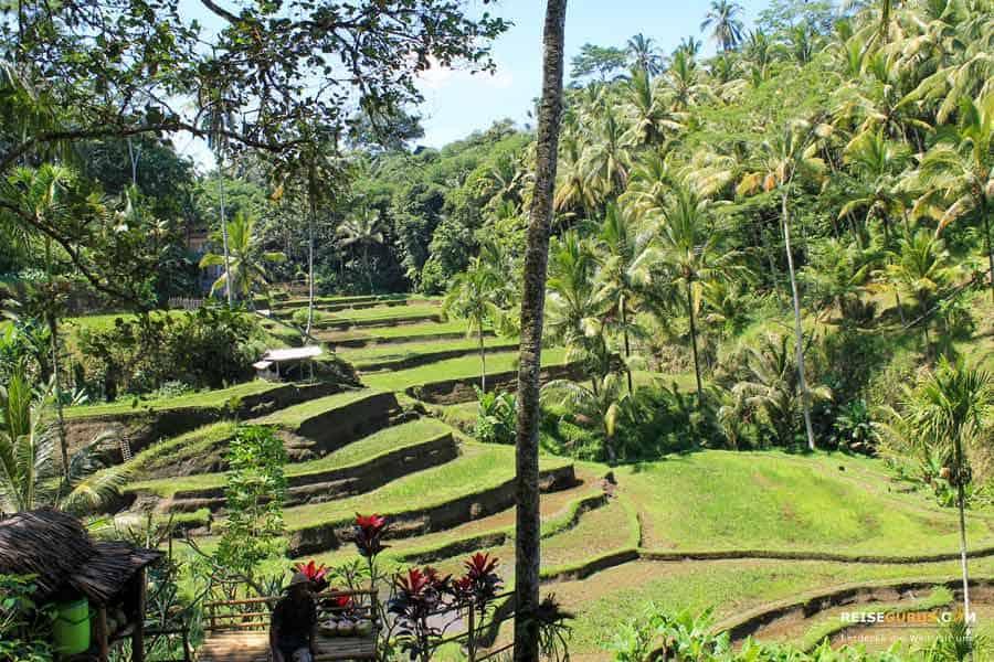 Die 4 schönsten Reisfelder auf Bali