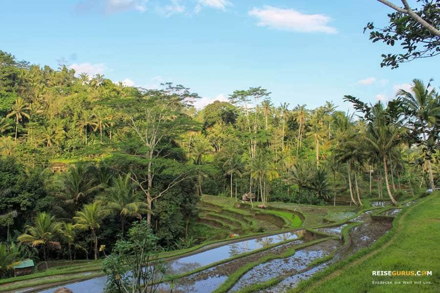 Tempel auf Bali Touren