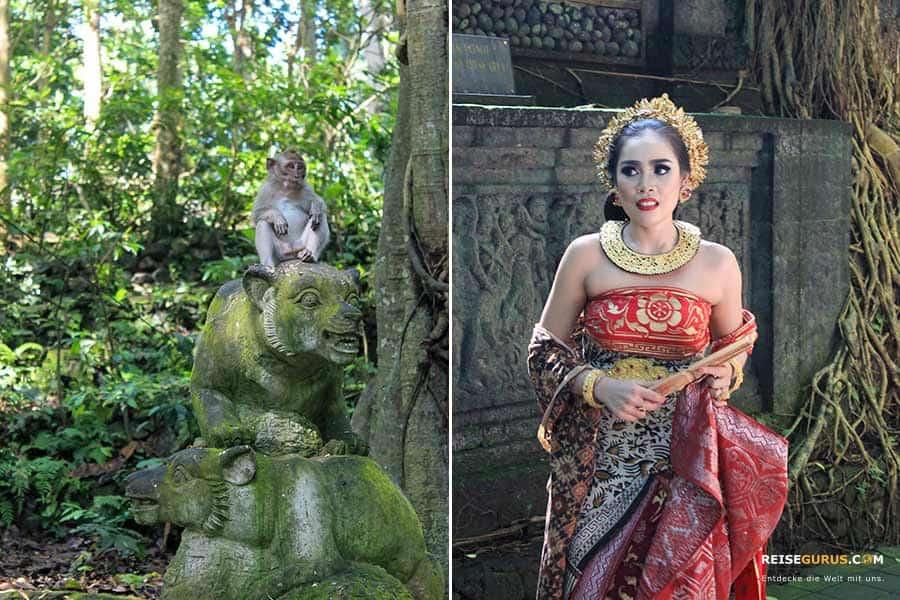 Monkey Forest Ubud Touren