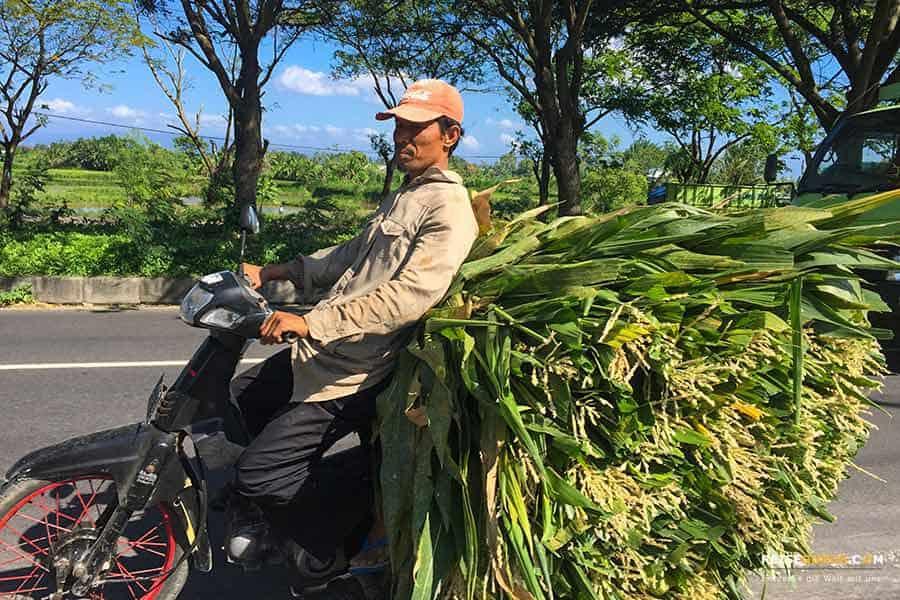 Bali Roller mieten Verkehr in Indonesien