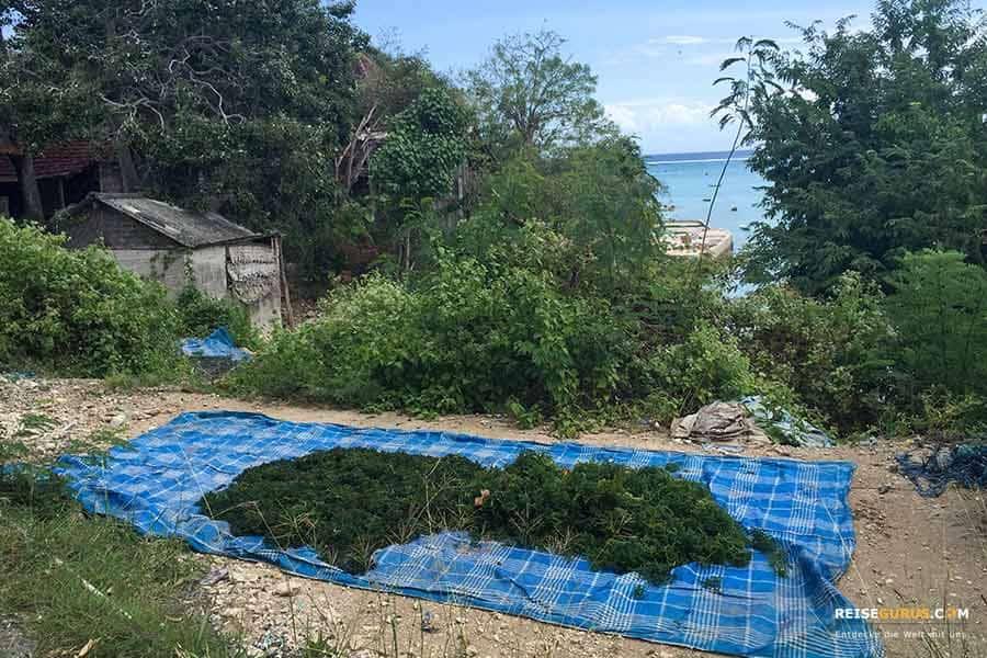 Nusa Ceningan Sehenswürdigkeiten Fischerdörfer u. Algenzucht