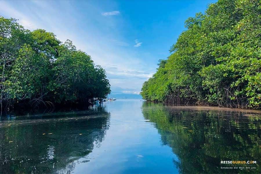 Mangrove Forest Nusa Lembongan