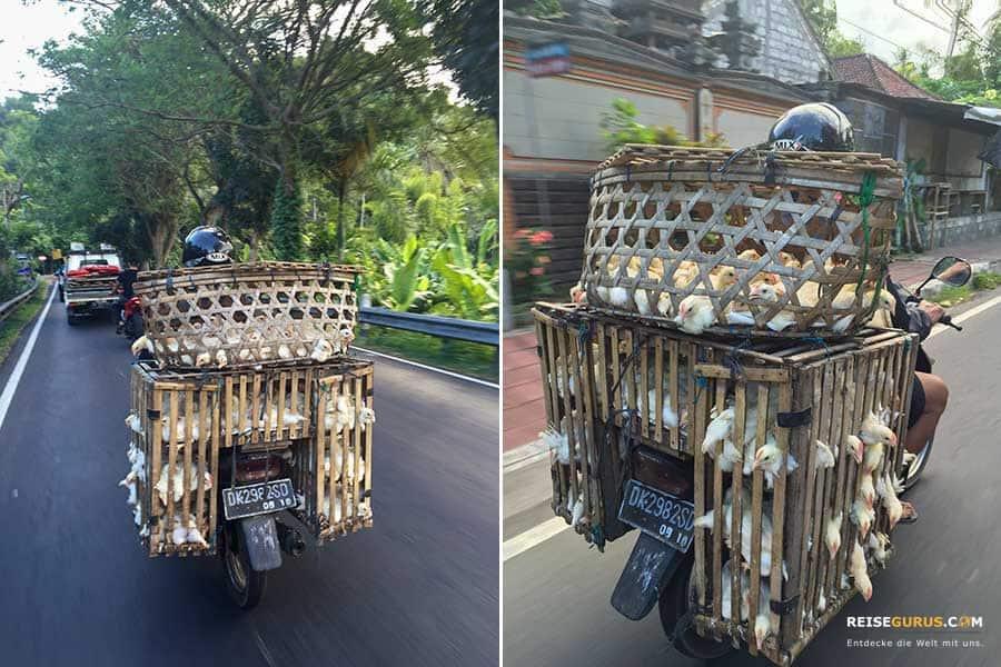 In Indonesien und Bali Roller mieten