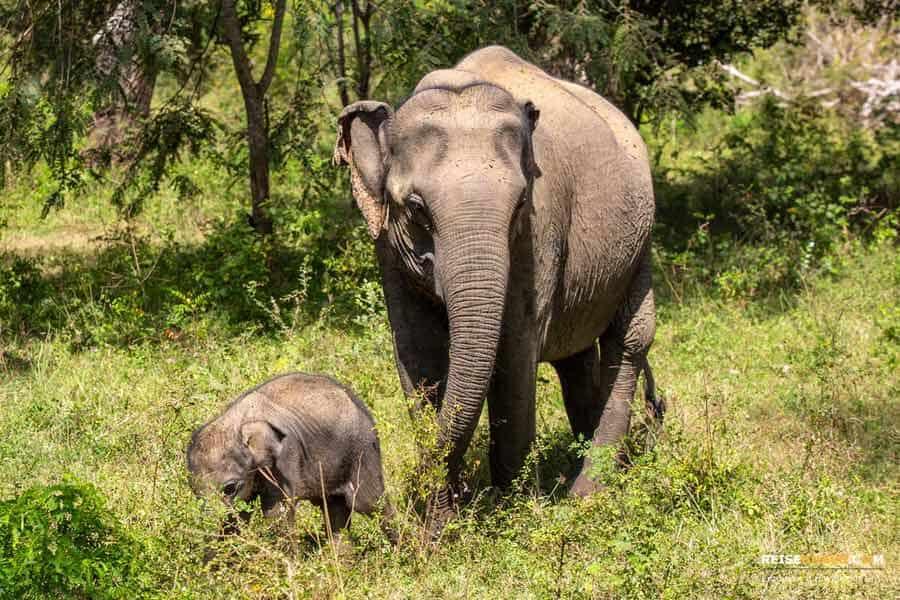 Highlights bei einer Yala Nationalpark Safari