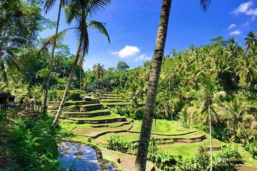 Bali Urlaub Klima in Indonesien
