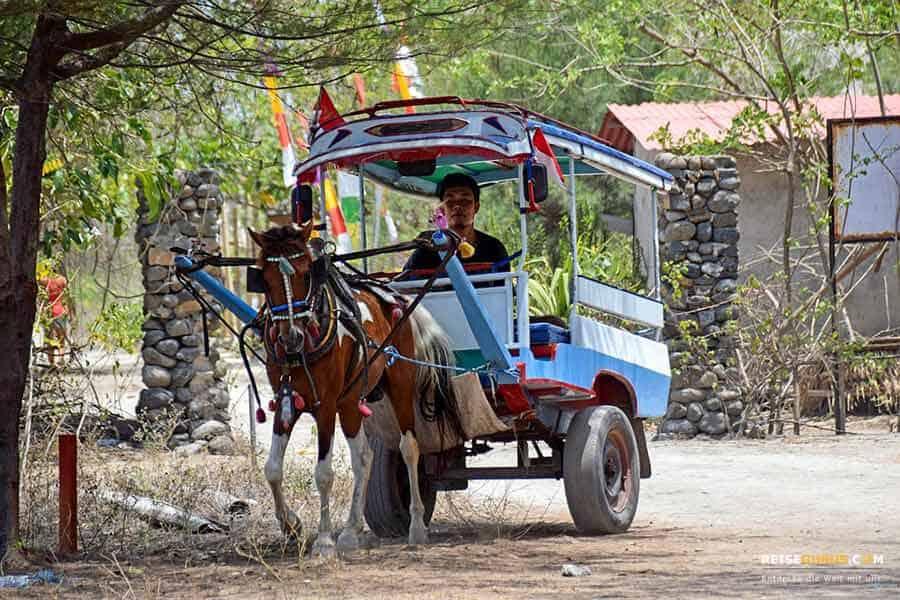 Gili Inseln Pferdekutschen und reiten