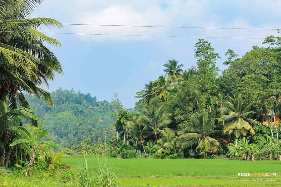 Sri Lanka Klima