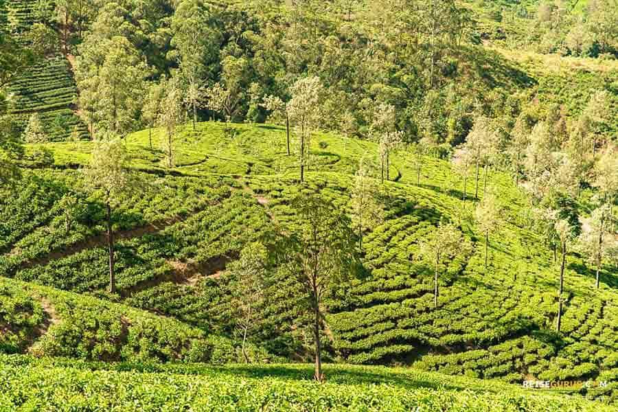Tipps für die Sri Lanka Zugfahrt