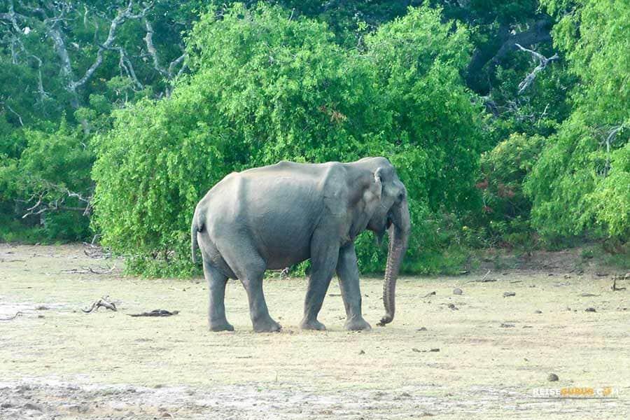 Yala Nationalpark Safari in Sri Lanka