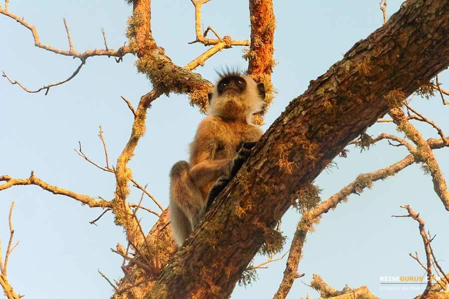 Tiere im Yala Nationalpark
