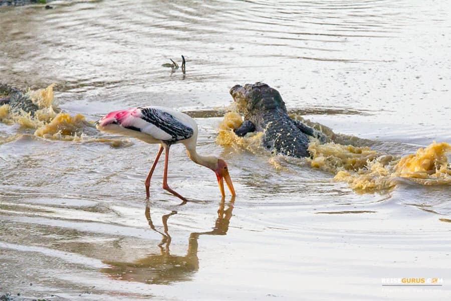 nationalpark safari in sri lanka