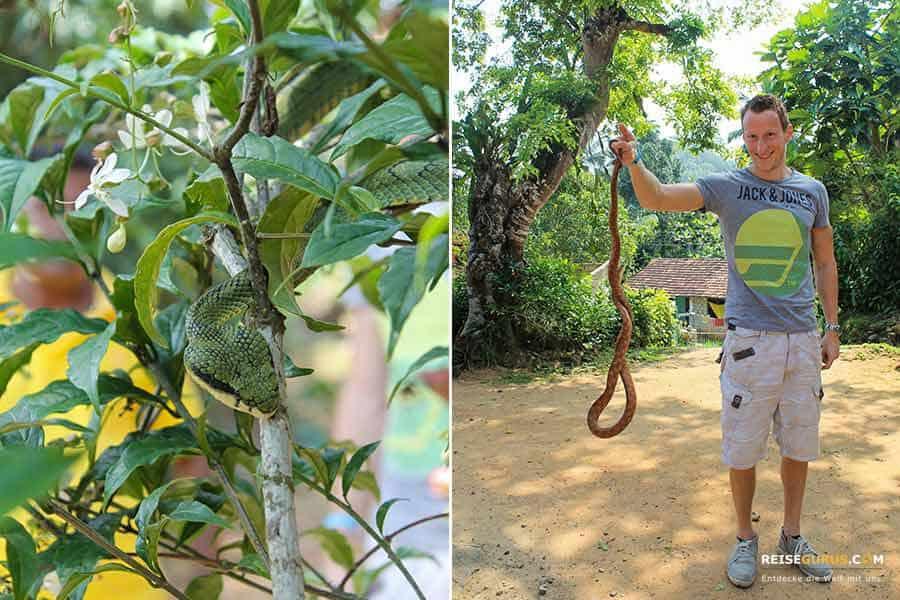 Schlangenfarm Sri Lanka