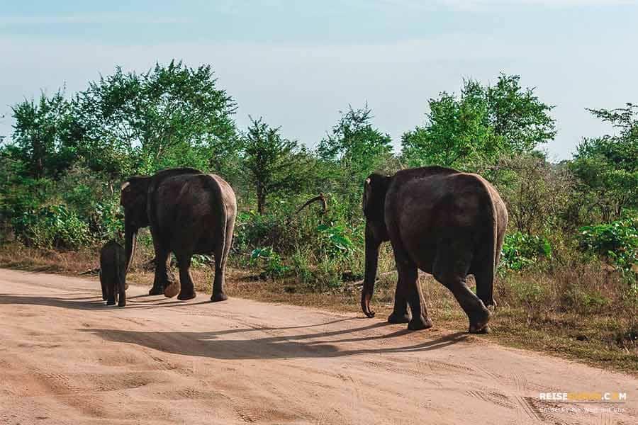 Sri Lanka Ausflugsziele im Süden