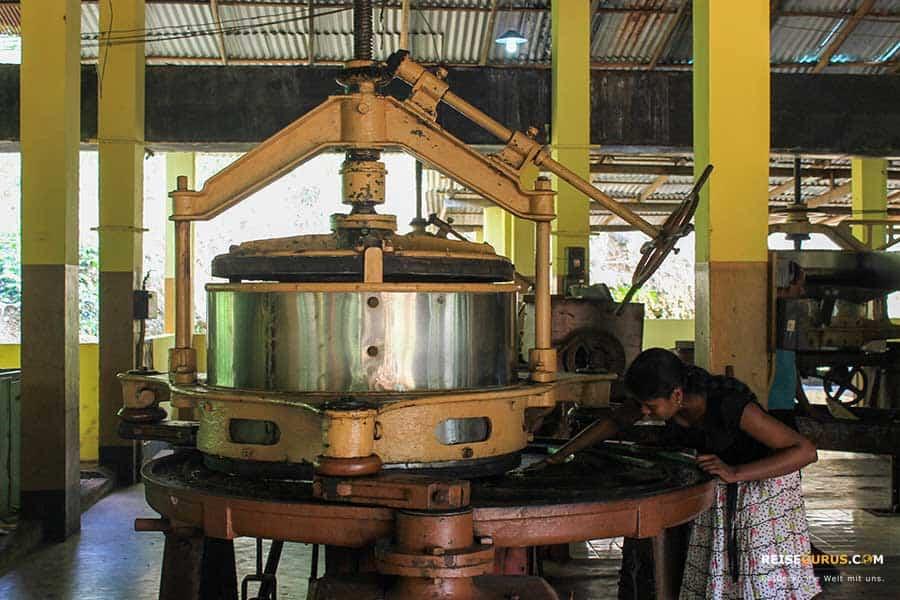 Sri Lanka Tuktuk Tour Teefabrik