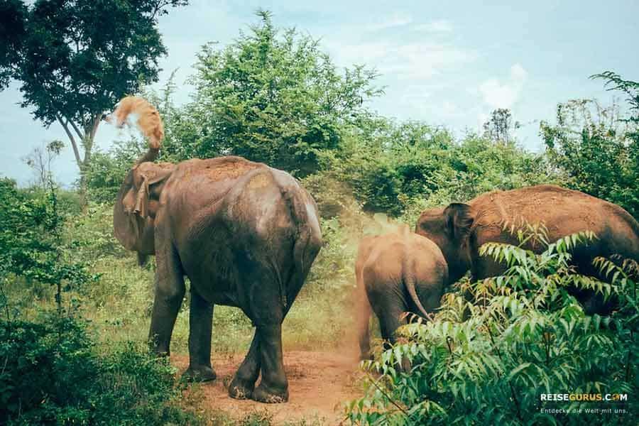 Udawalawe Nationalpark Sri Lanka