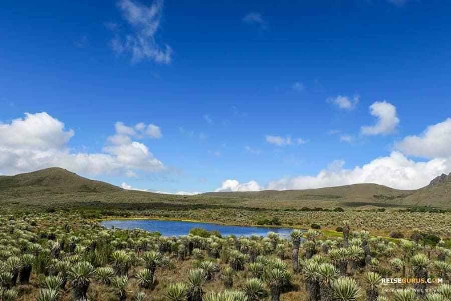 Paramo Sumapaz Nationalpark Foto