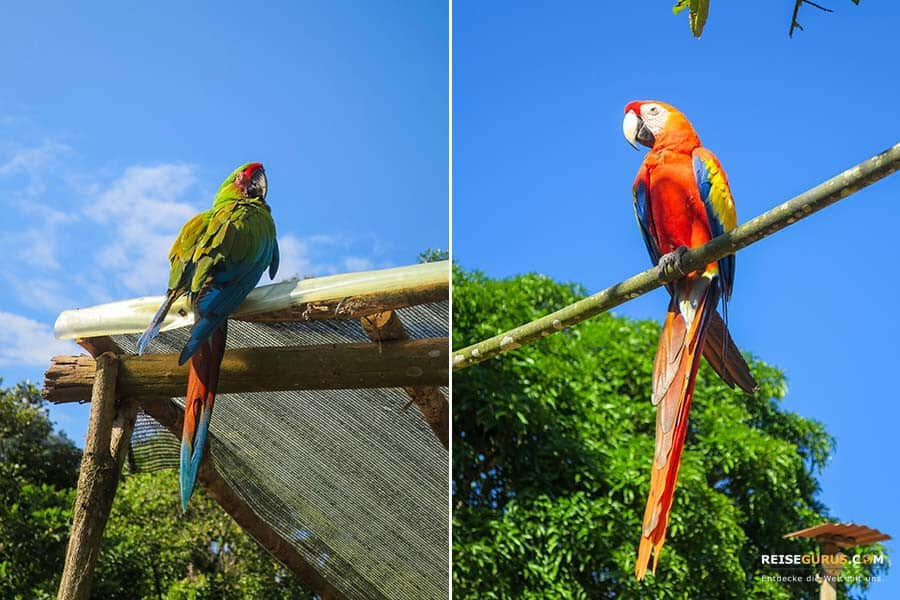 Papageien in der Sierra Nevada
