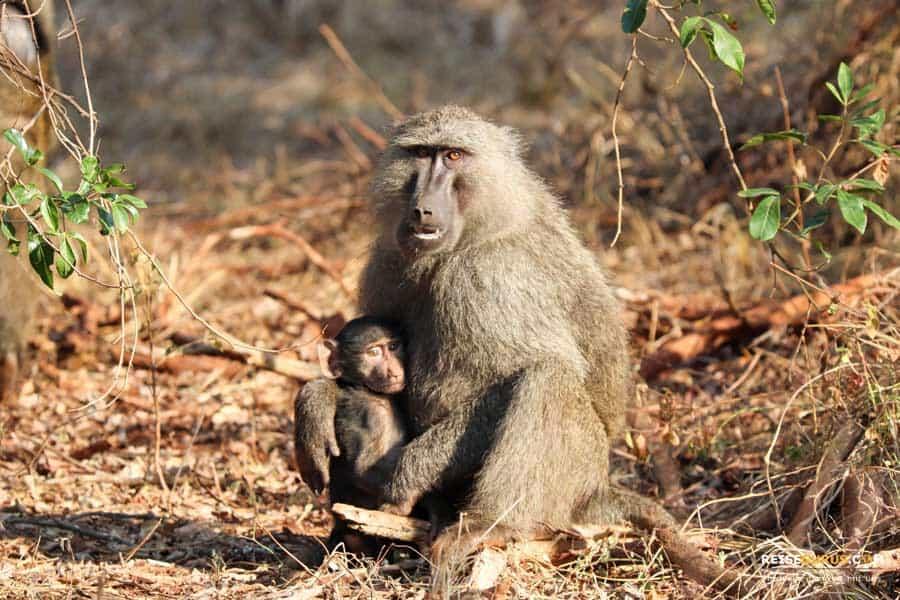 Aktivitäten im Akagera Nationalpark
