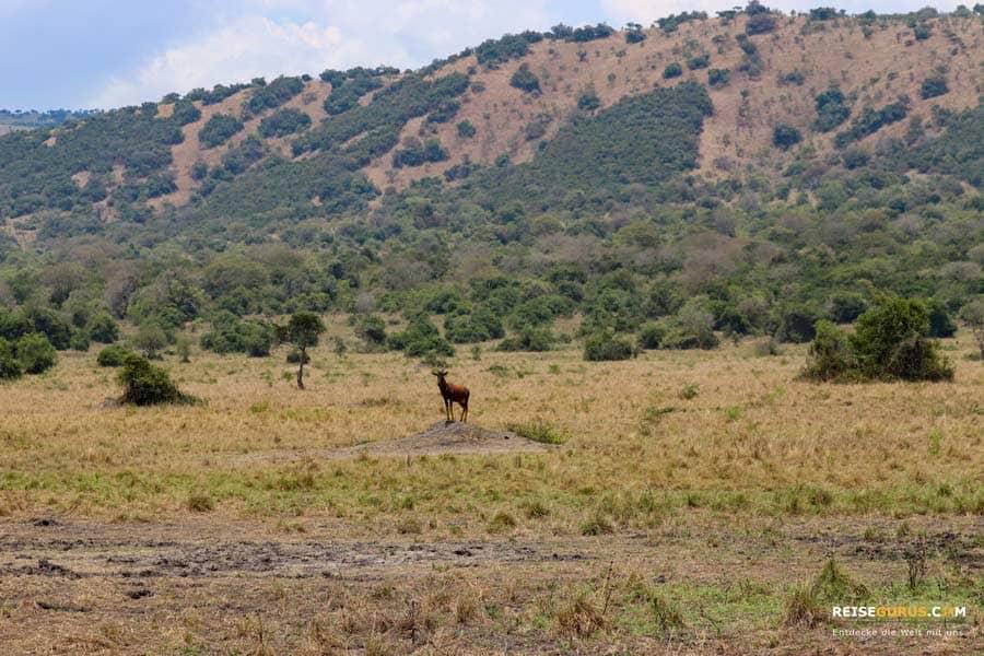 Akagera Nationalpark Öffnungszeiten