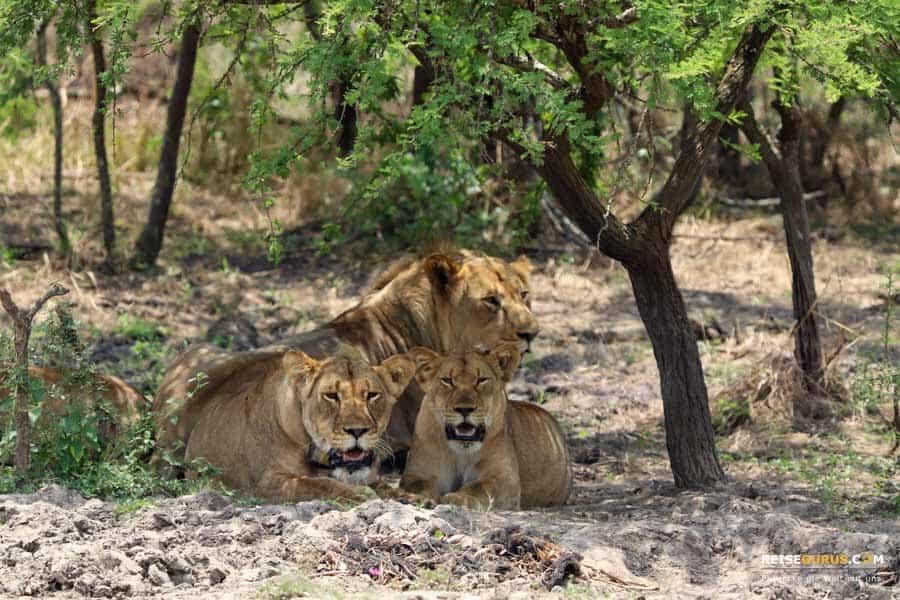 Akagera Nationalpark