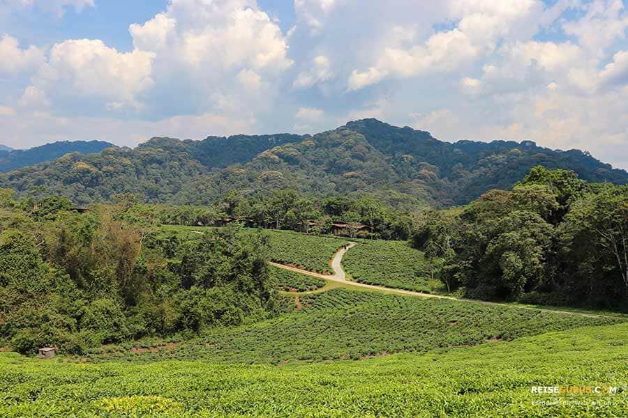 Aktivitäten Nyungwe Forest