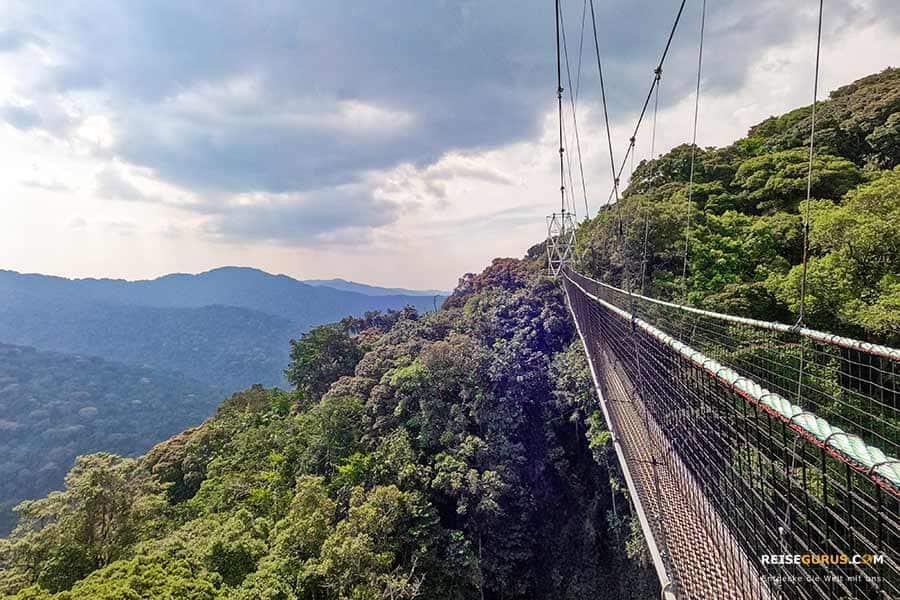 Nyungwe Nationalpark Canopy Walk