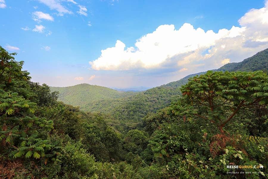 Nyungwe Nationalpark Highlights