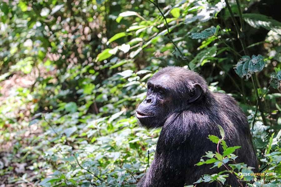 Nyungwe Nationalpark