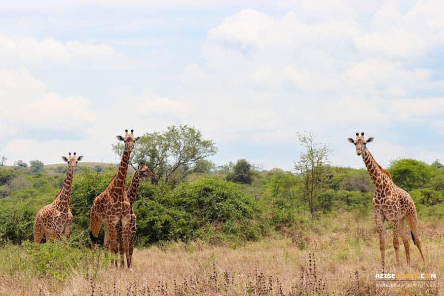 Safari in Ruanda Fazit