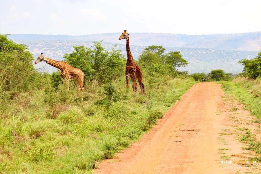 Safari in Ruanda