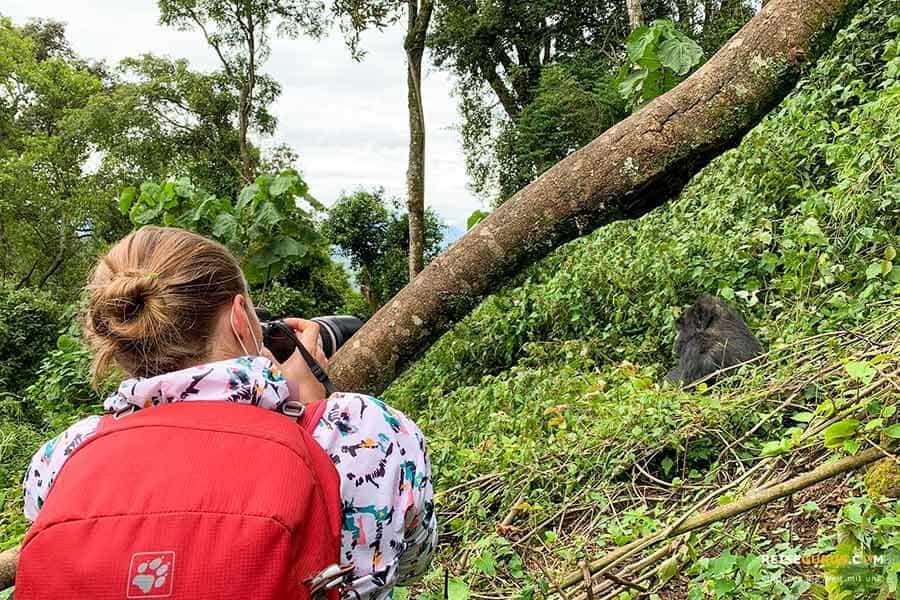 Gorilla Trekking Regeln