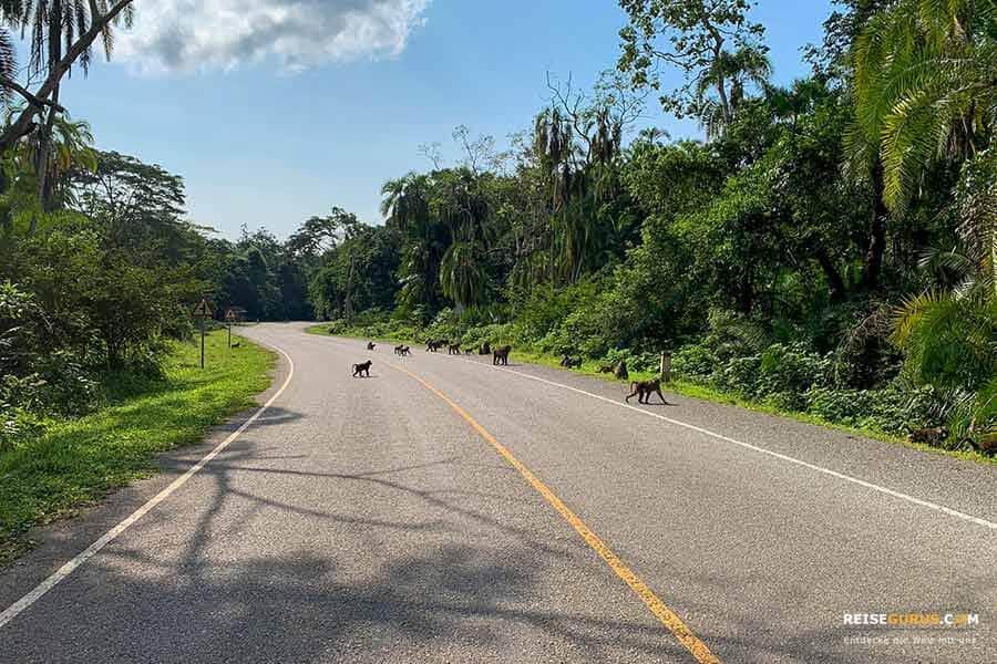 Kibale Forest Anreise