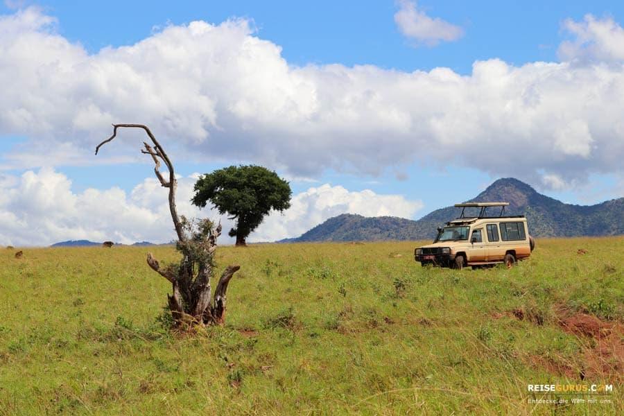 Kidepo Nationalpark Uganda