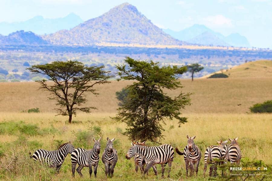 Tierwelt Kidepo Valley Nationalpark