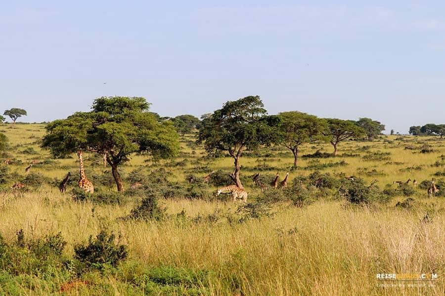 Aktivitäten Murchison Falls Nationalpark