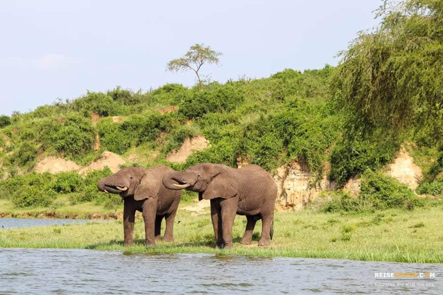 Boots Safari Uganda
