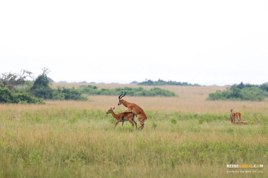 Guided Nature Walk Uganda