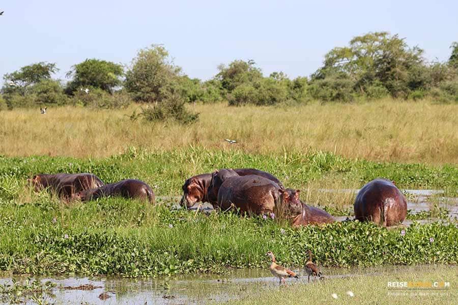 Murchison Falls Touren
