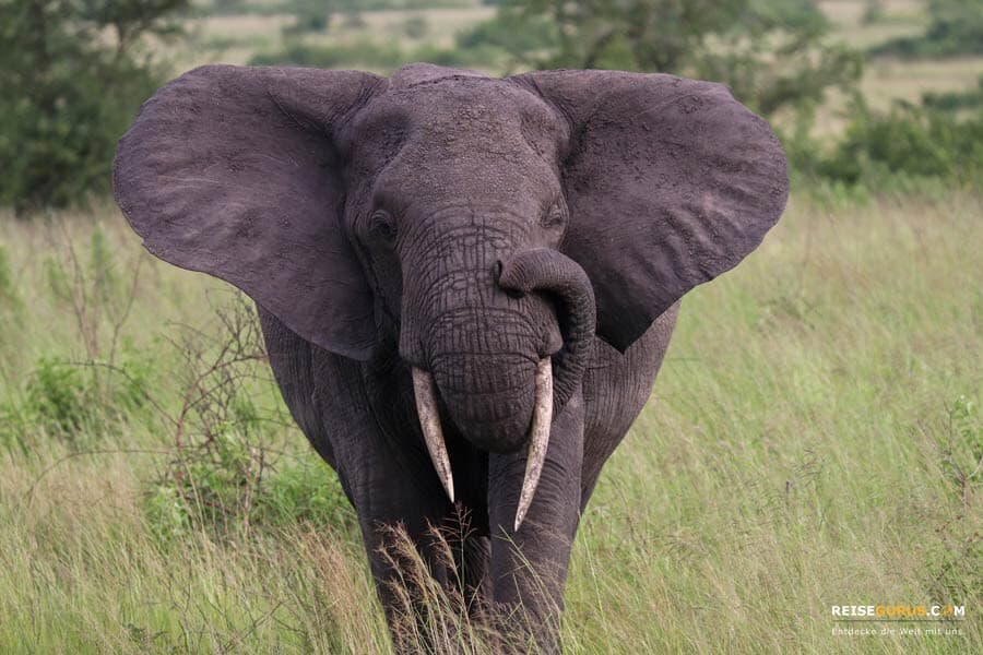 Safari Highlights Queen Elizabeth