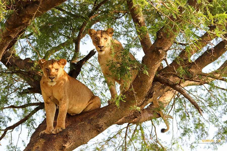 Safari Tour Murchison Falls