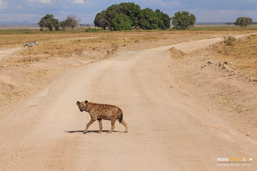 Amboseli Nationalpark Safari