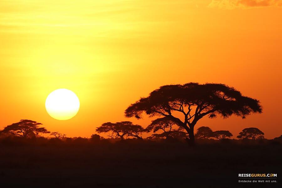 Sonnenuntergänge Safari