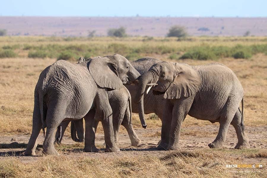 Umgang mit Elefanten in Kenia