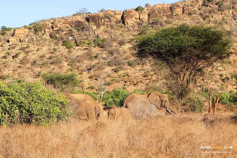 Tsavo West Nationalpark Kenia