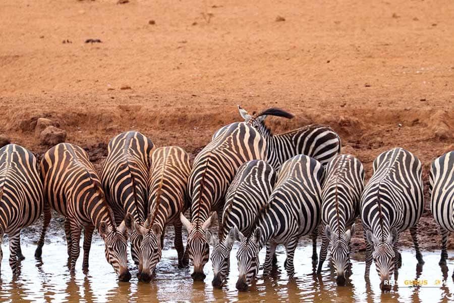 Tsavo West Nationalpark in Kenia