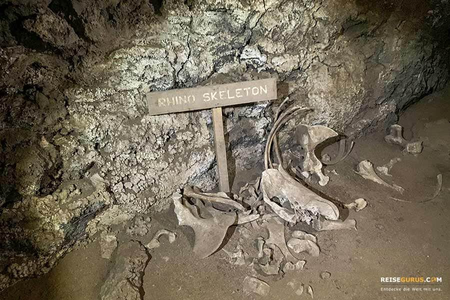 poacher Wilderer Höhle
