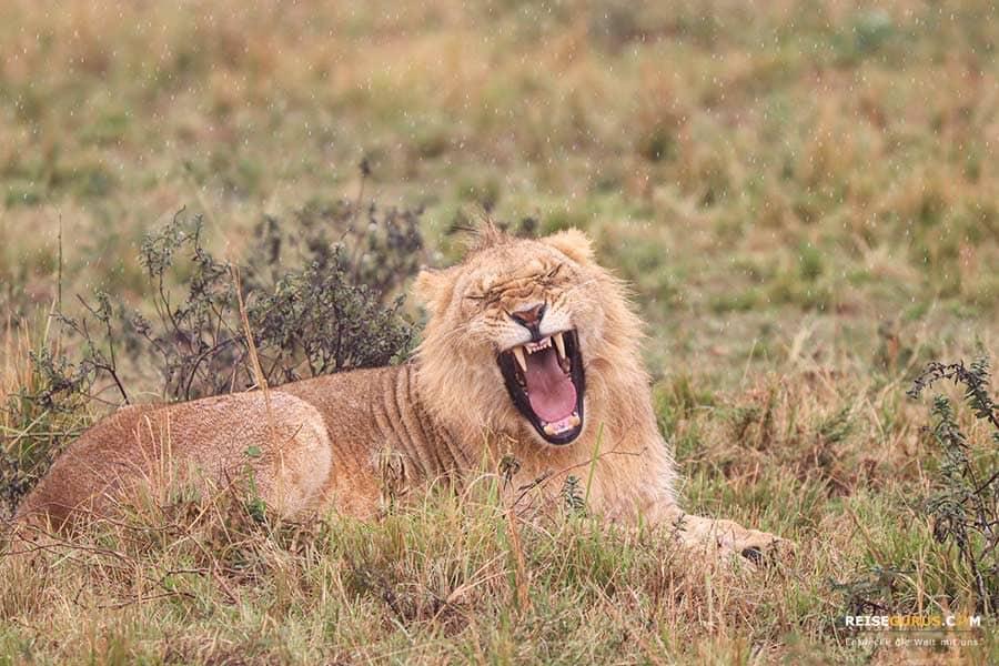 Beste Reisezeit Masai Mara